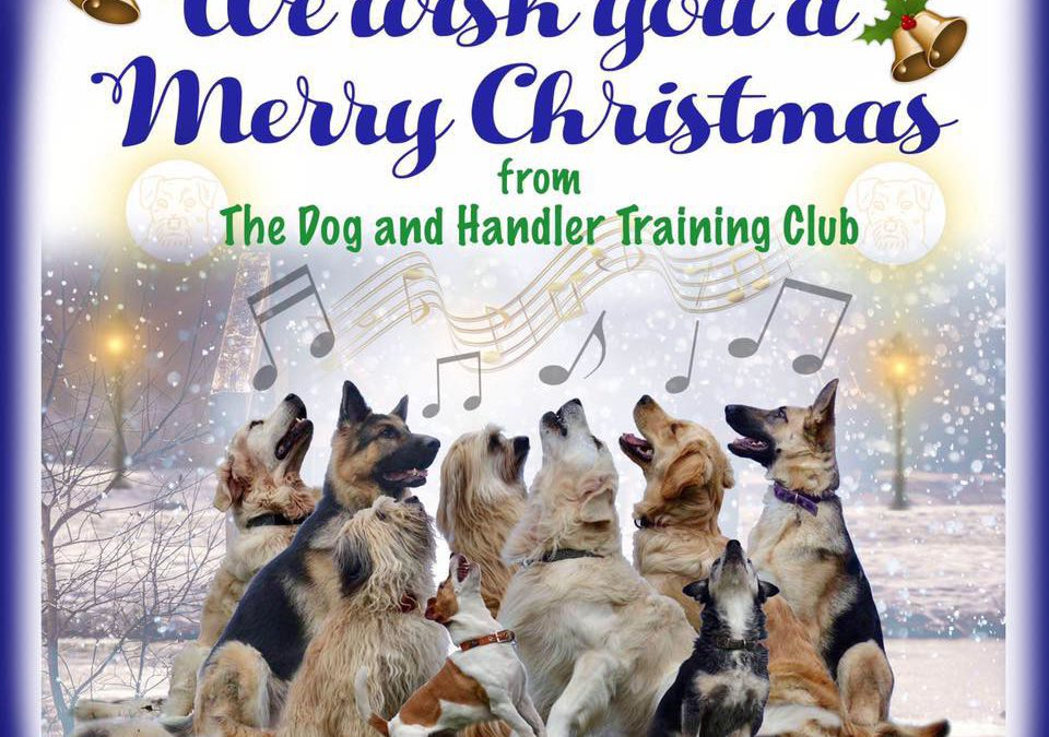The Dog and Handler Courses Christmas Blog