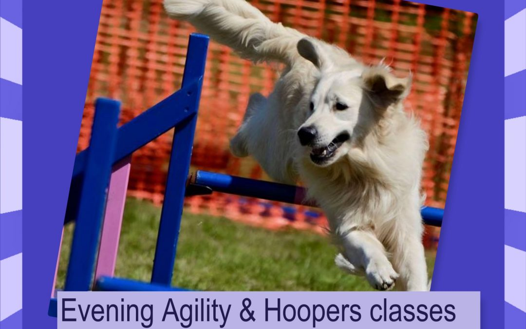New Evening agility and hoopers classes starting soon