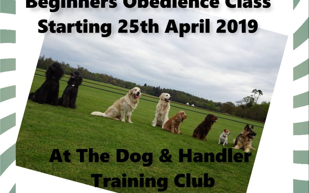 Beginners Obedience Classes